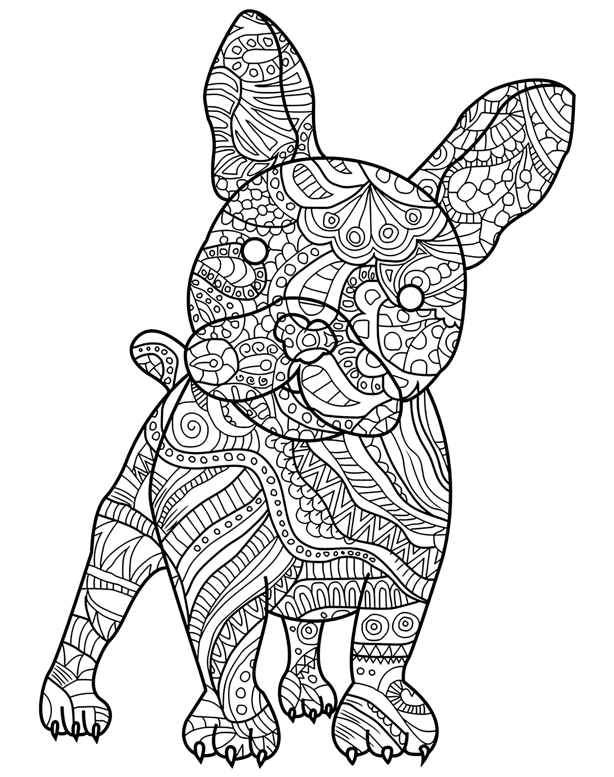 French bulldog and his small muscular body filled with pretty patterns