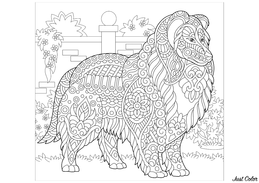 A beautiful dog to color (Collie)