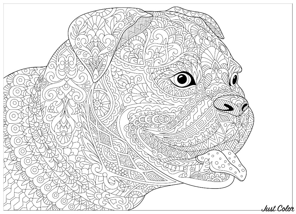 Dog french bulldog - Dogs Adult Coloring Pages