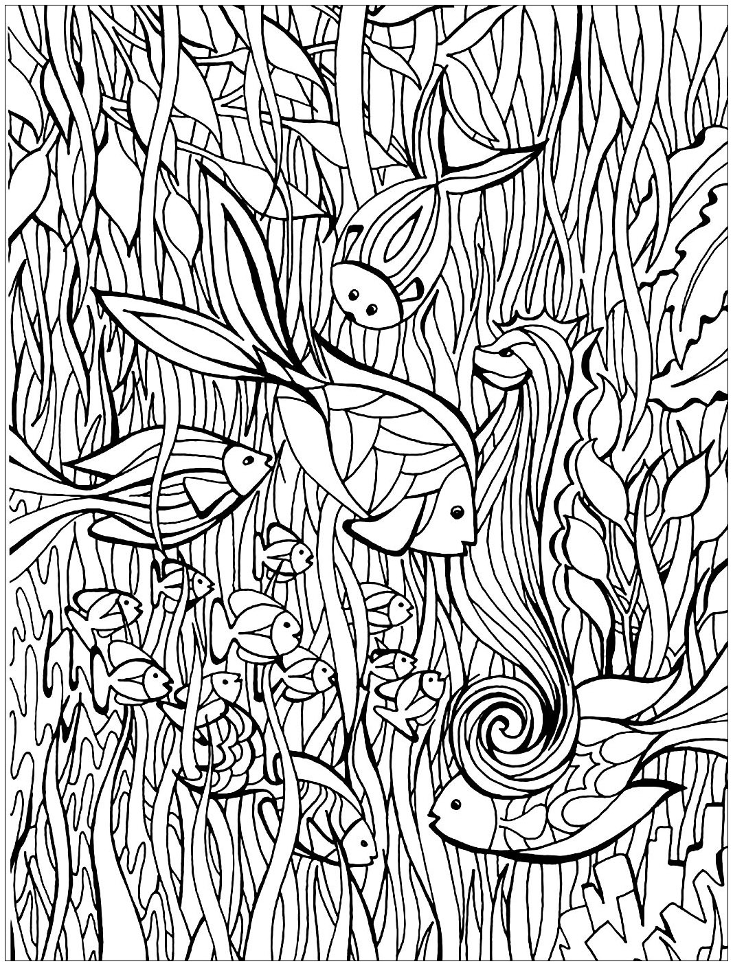 Fish details fishes adult coloring pages for Adult fish coloring pages