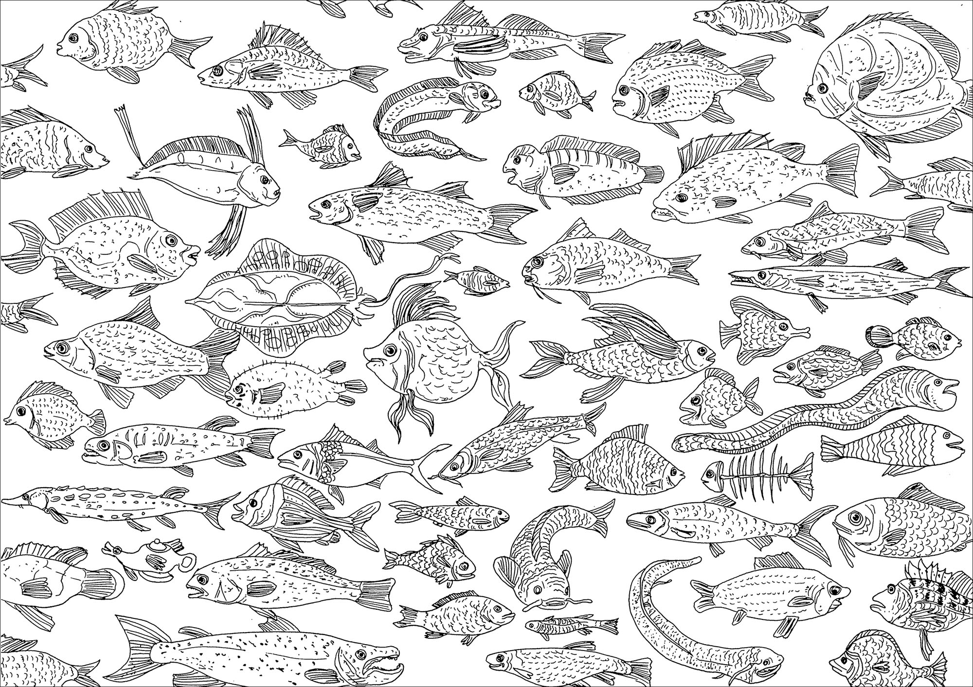Incredible fishes swimming in the sea, just waiting for colors
