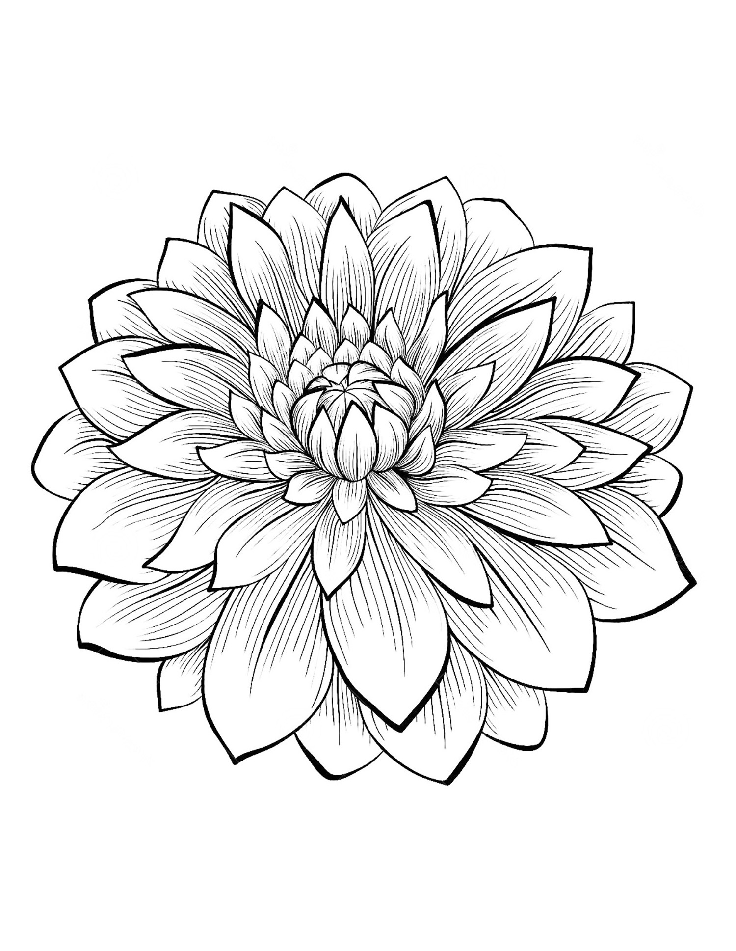 coloring pages for adults of flowers - dahlia flower flowers adult coloring pages