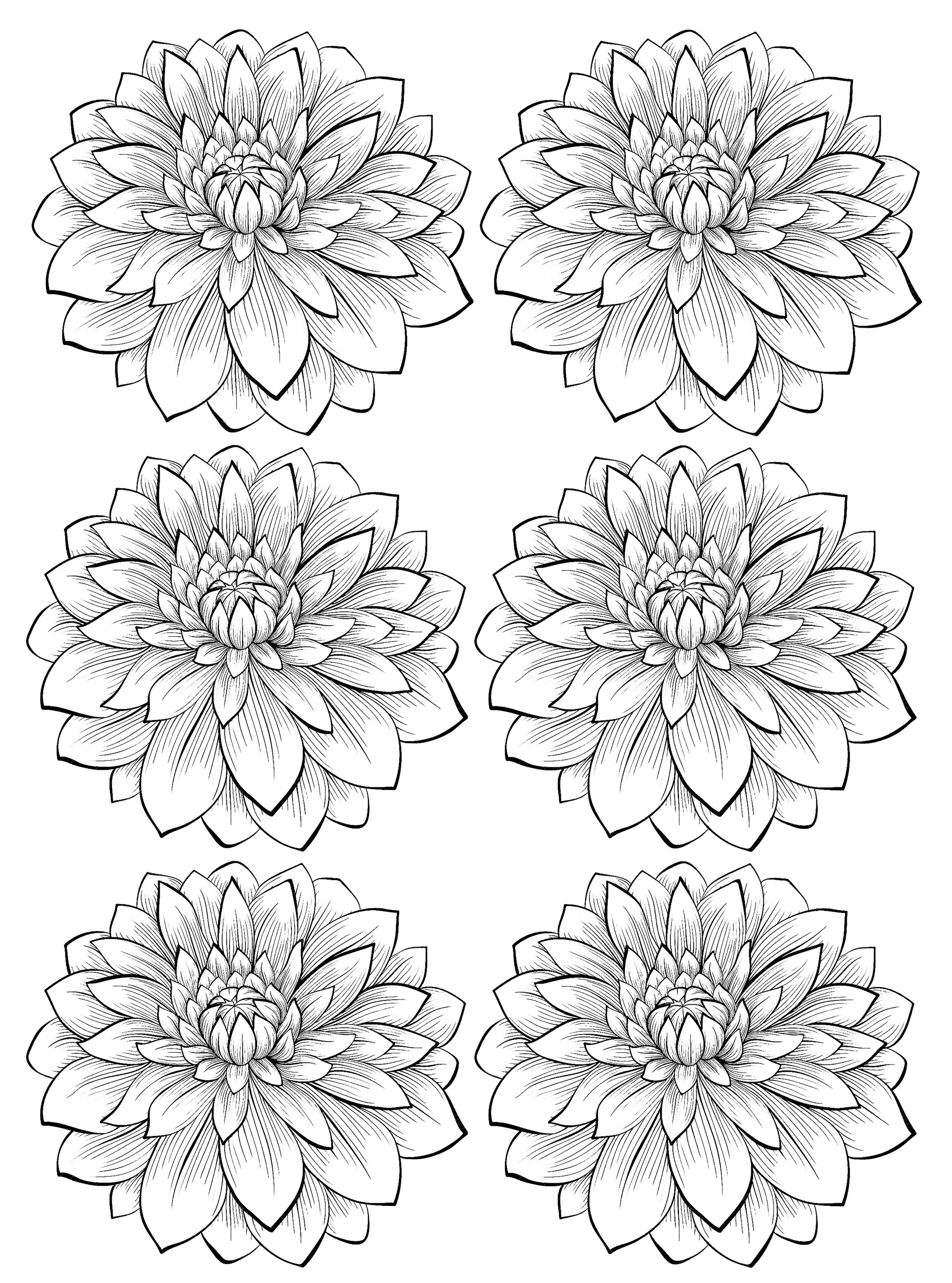 Six dahlia flower Flowers Adult Coloring Pages