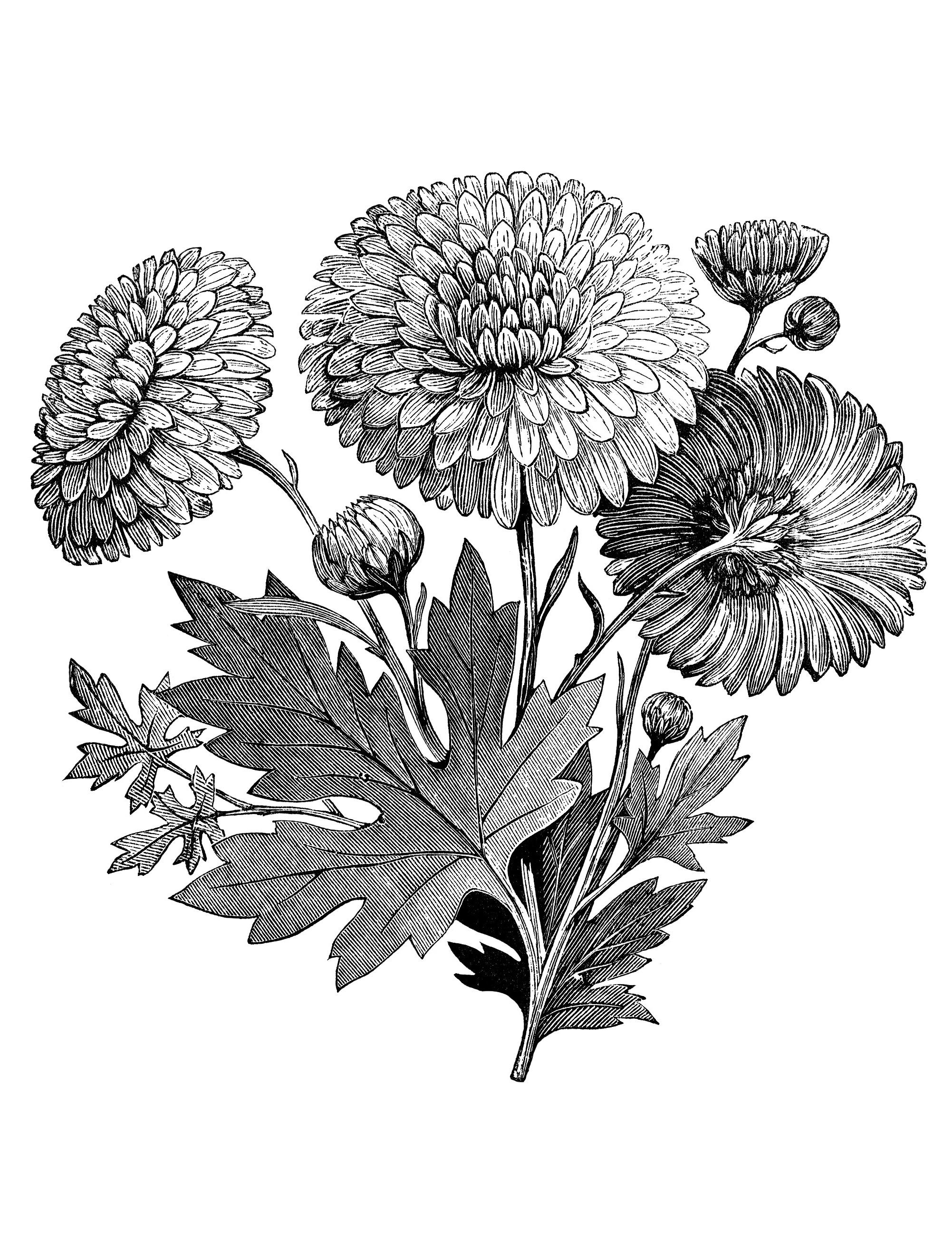 Vintage Flower Garden Clip Art Black And White Flowers Adult