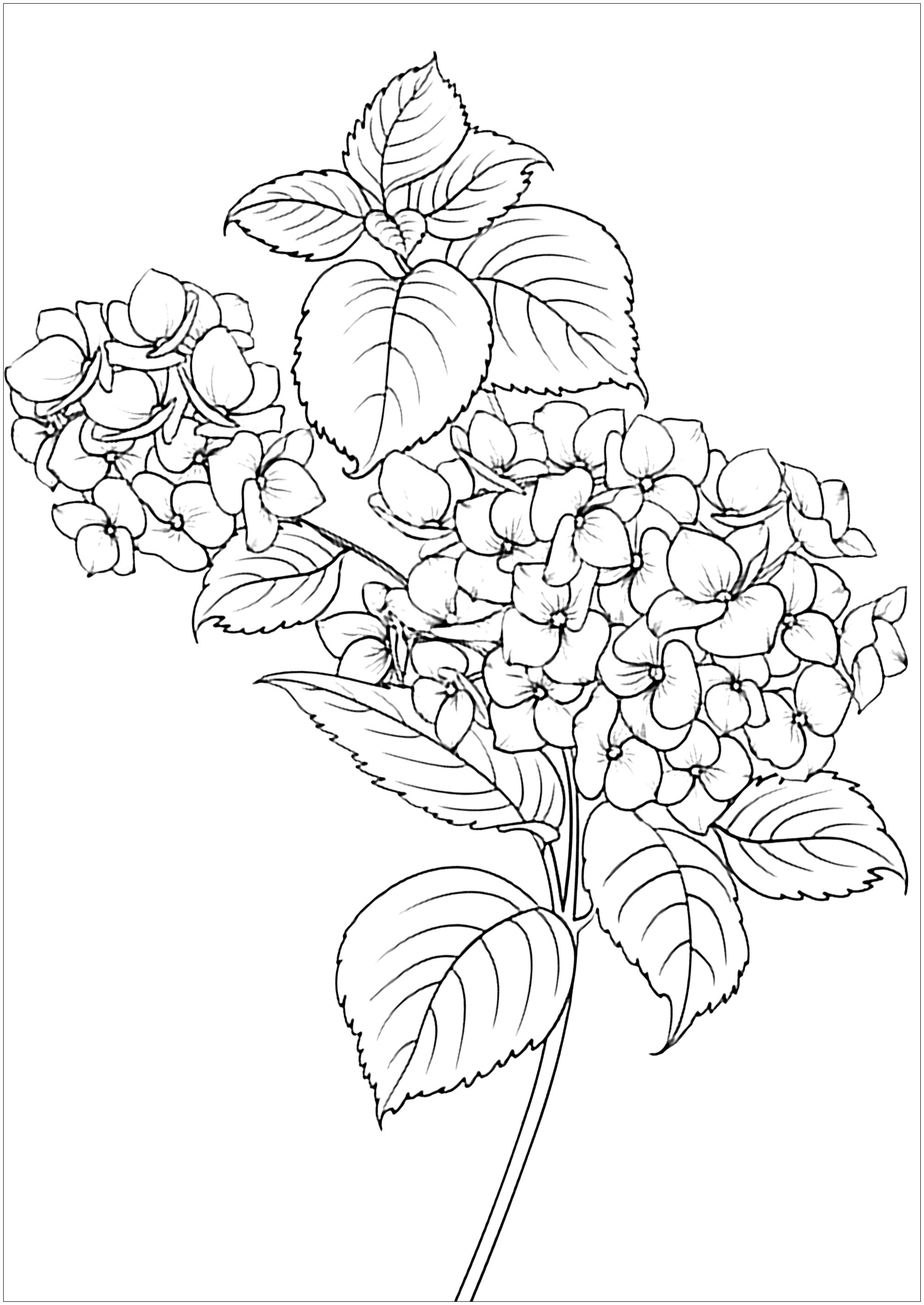 Simple coloring page with elegant flowers and leaves
