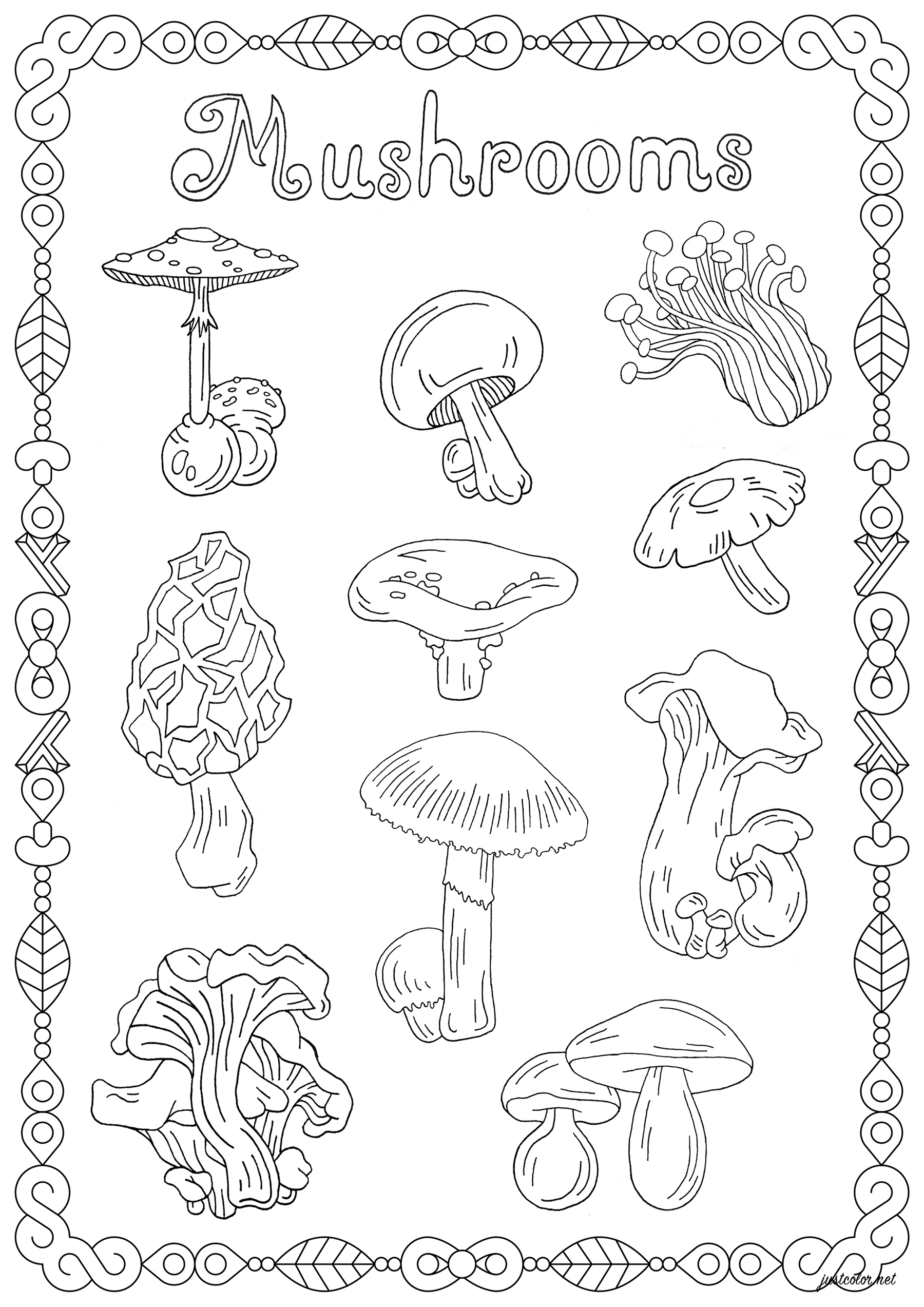 Color these different mushroom varieties, the beautiful frame around them, and the word 'Mushrooms'