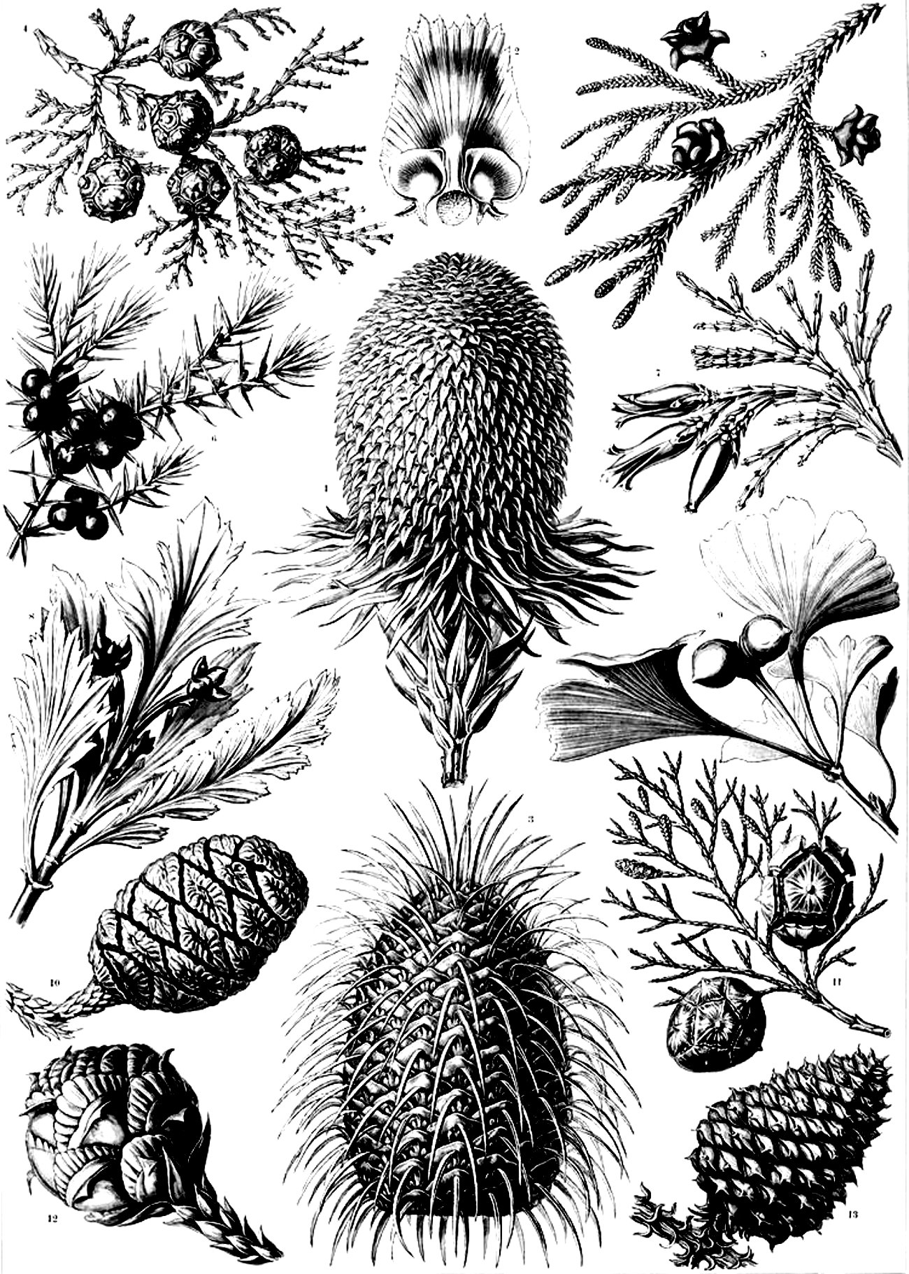 Old engraving flowers vegetation - Image with : Plant