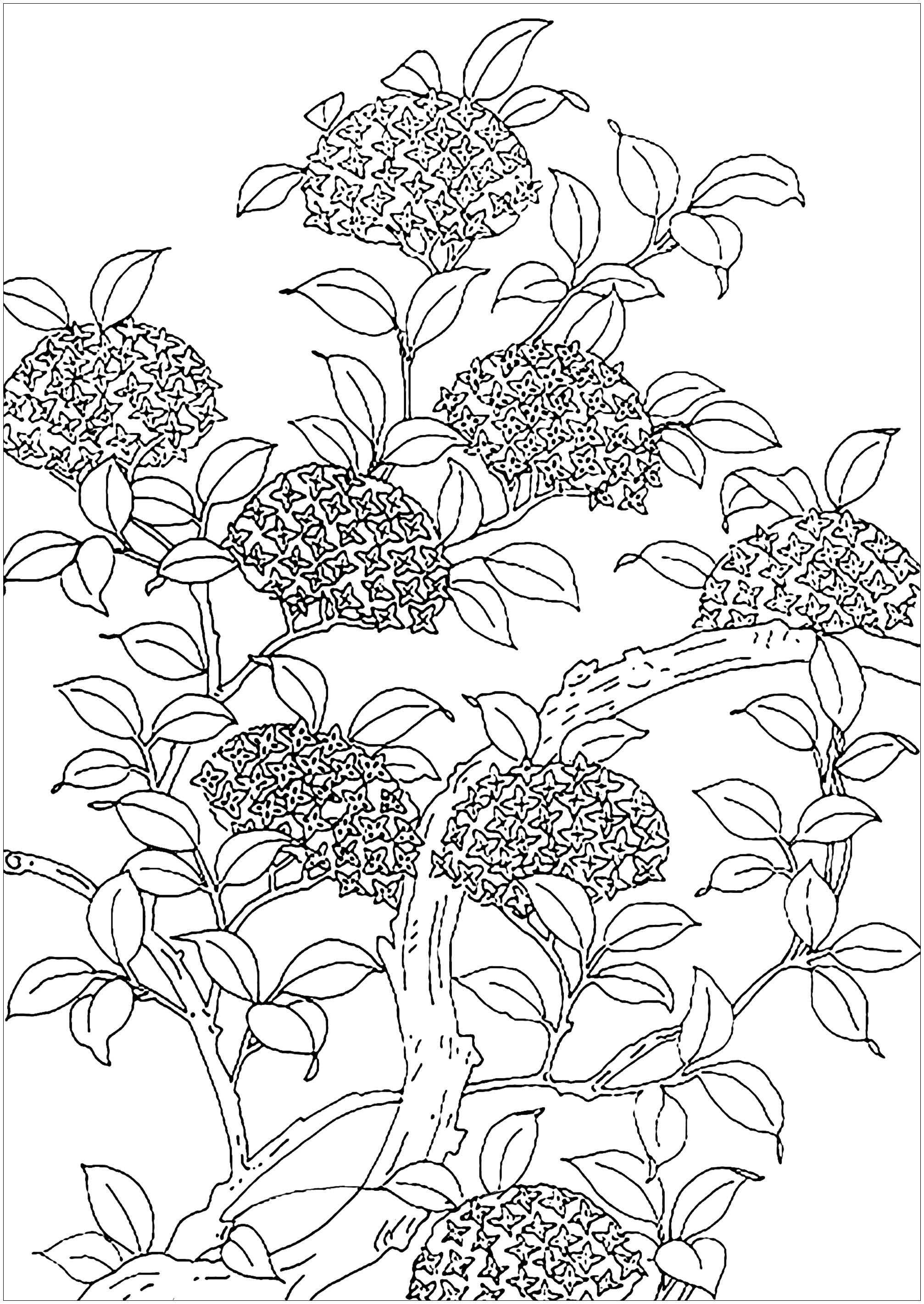 Nice flowered tree. Coloring page created from an old illustration.
