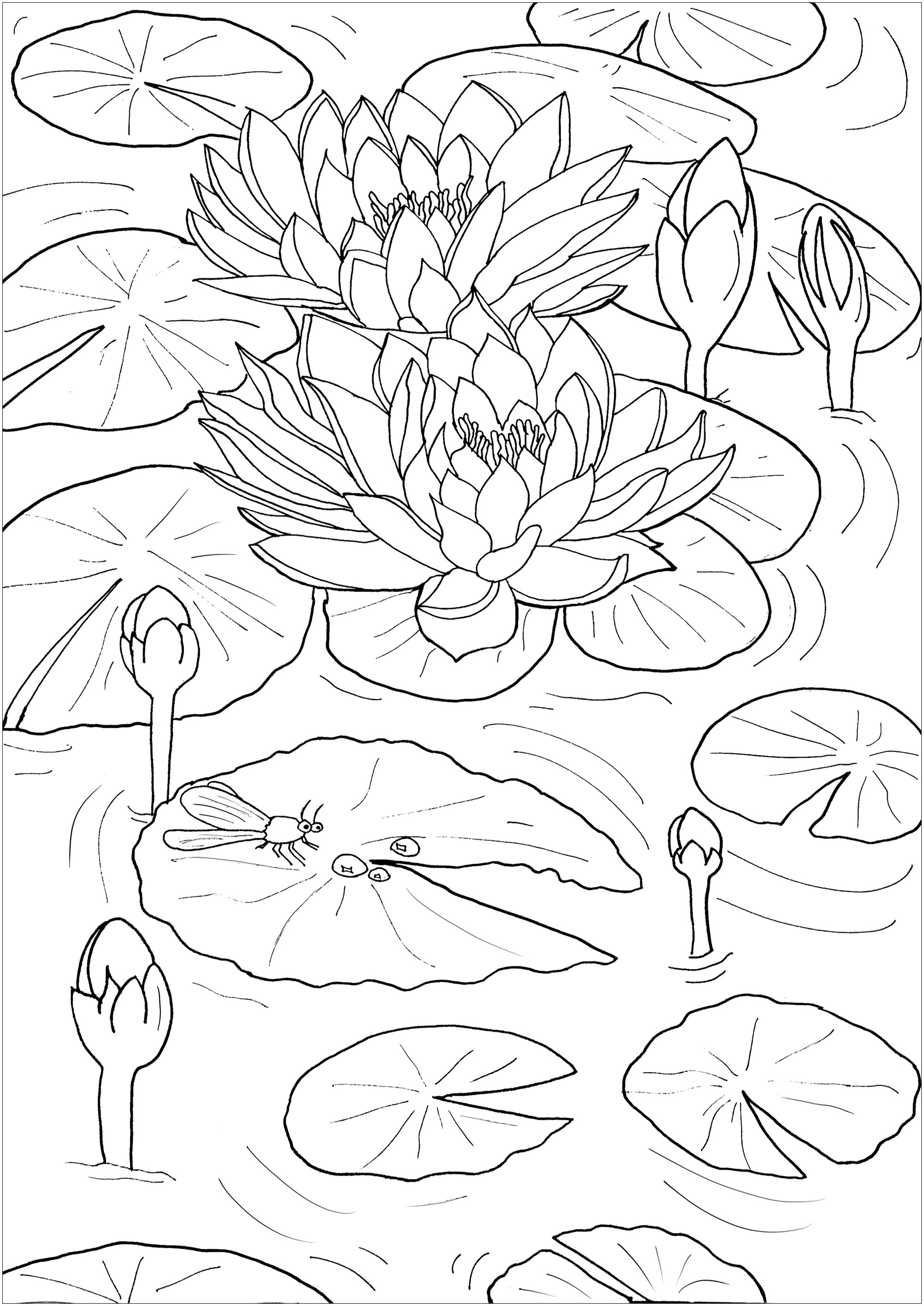 Coloring page of Water lilies and a little dragonfly