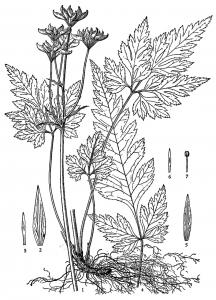 Coloring chinese medicinal herbs