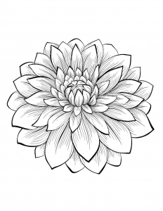coloring adult dahlia flower