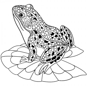 Coloring cute frog on water lily leaf