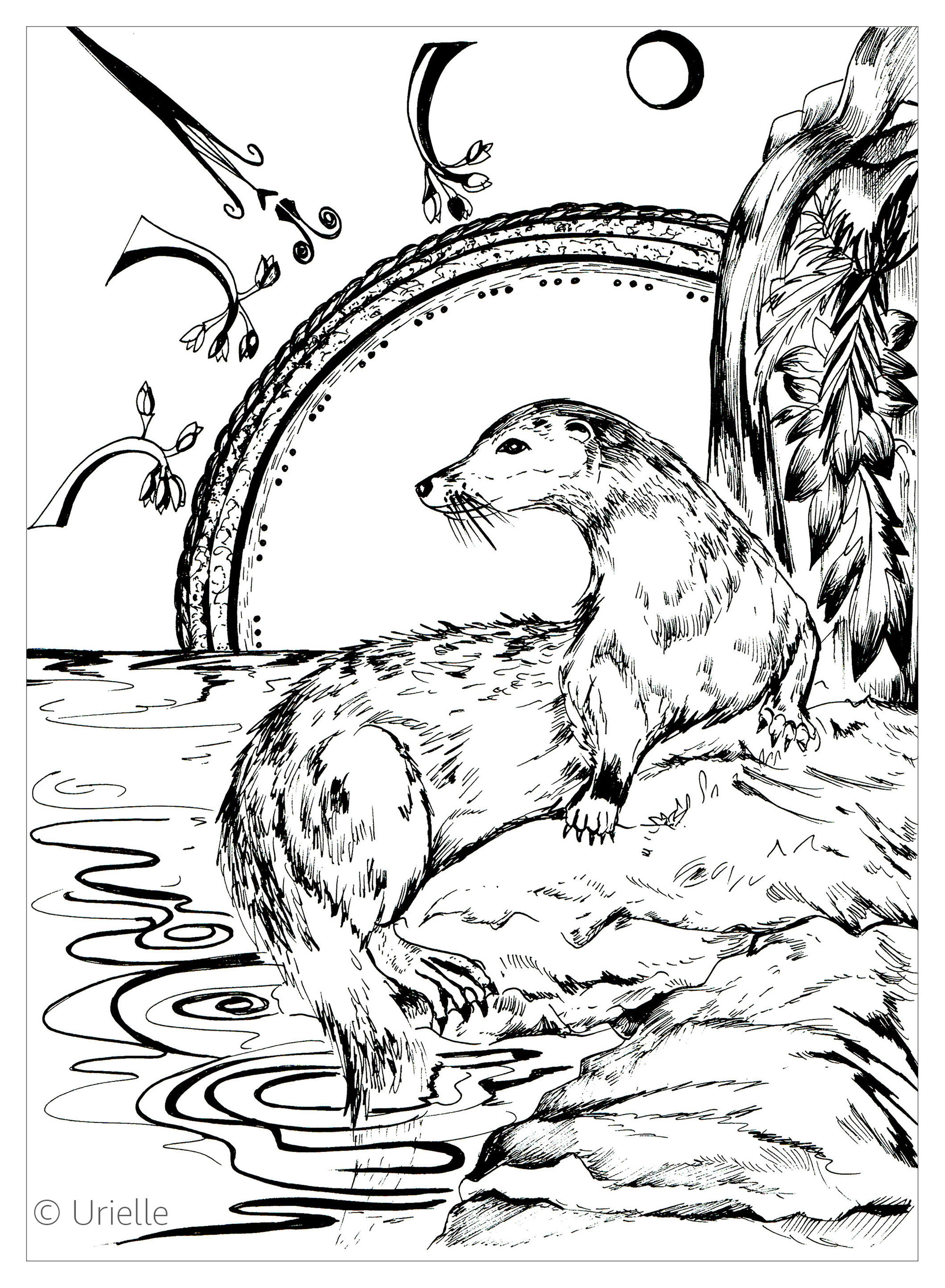 Coloring Page : Otter