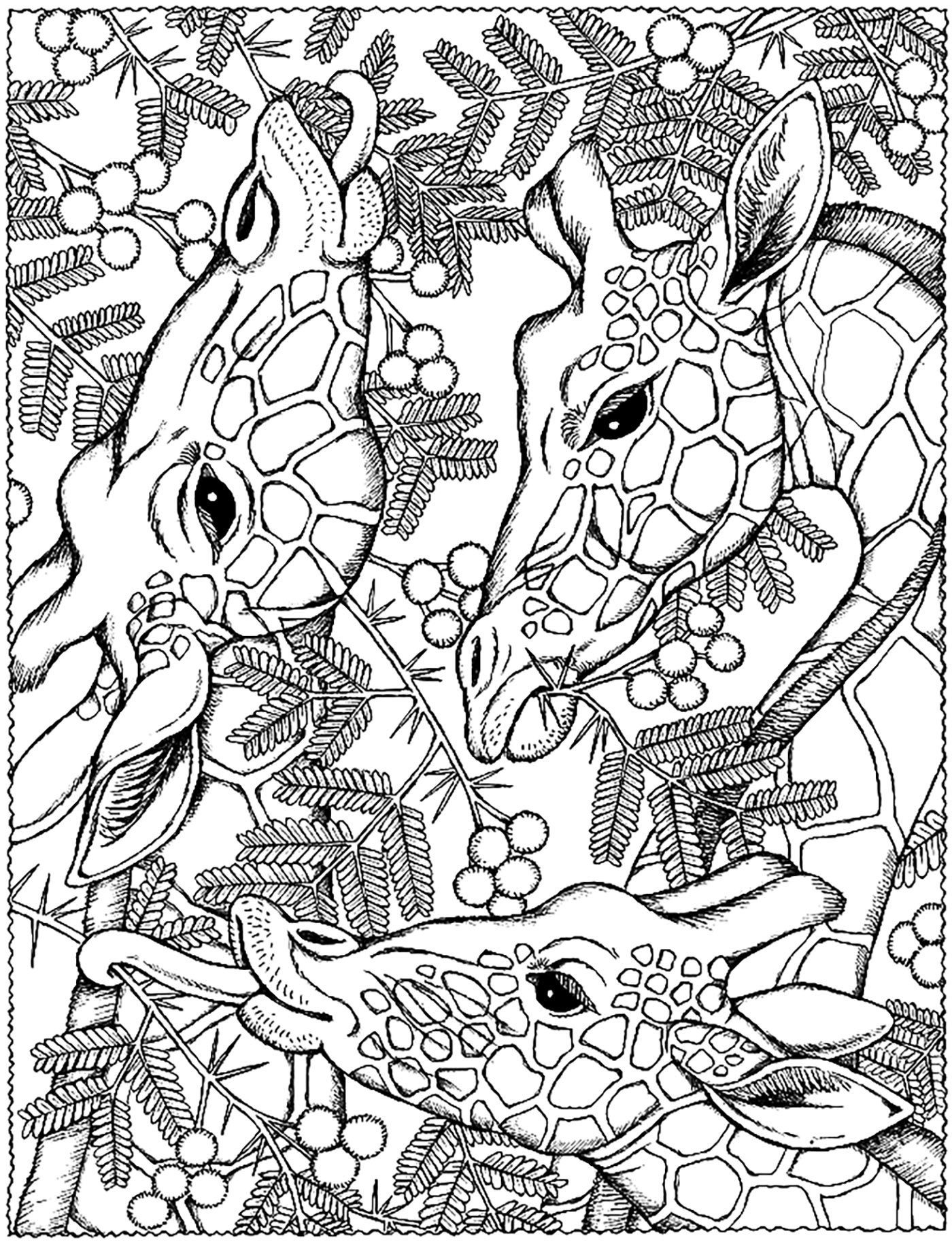 Giraffes heads - Giraffes Adult Coloring Pages