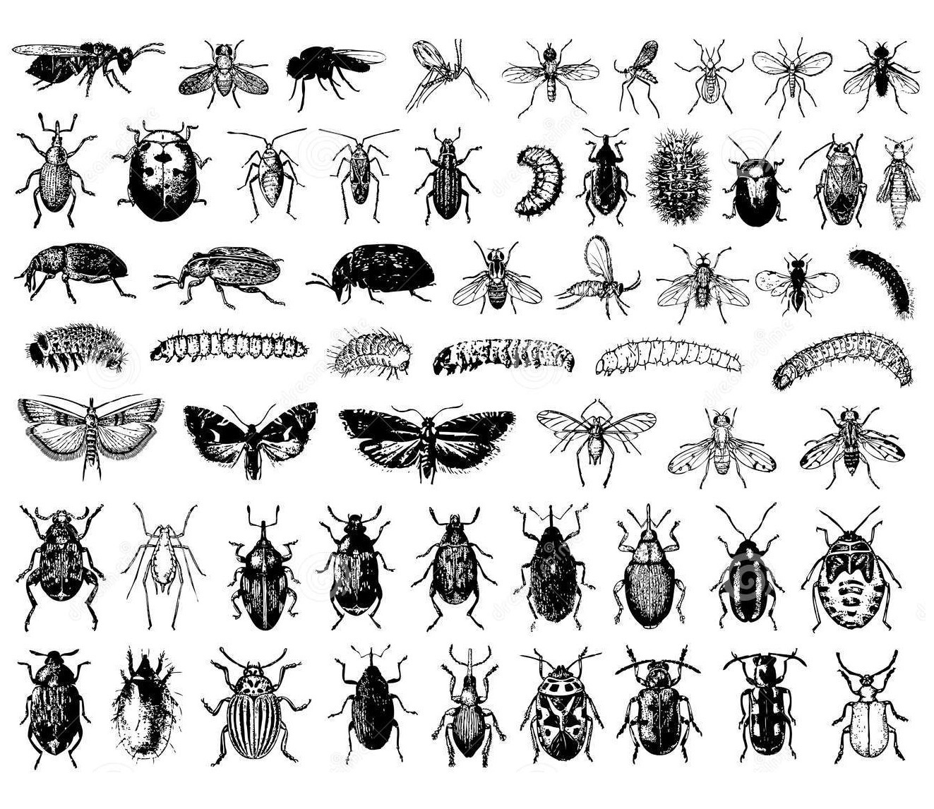 Coloring Page Insect Collection A Sheet Of Insects Each Them Can Be Colored