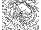 coloring-difficult-Butterfly