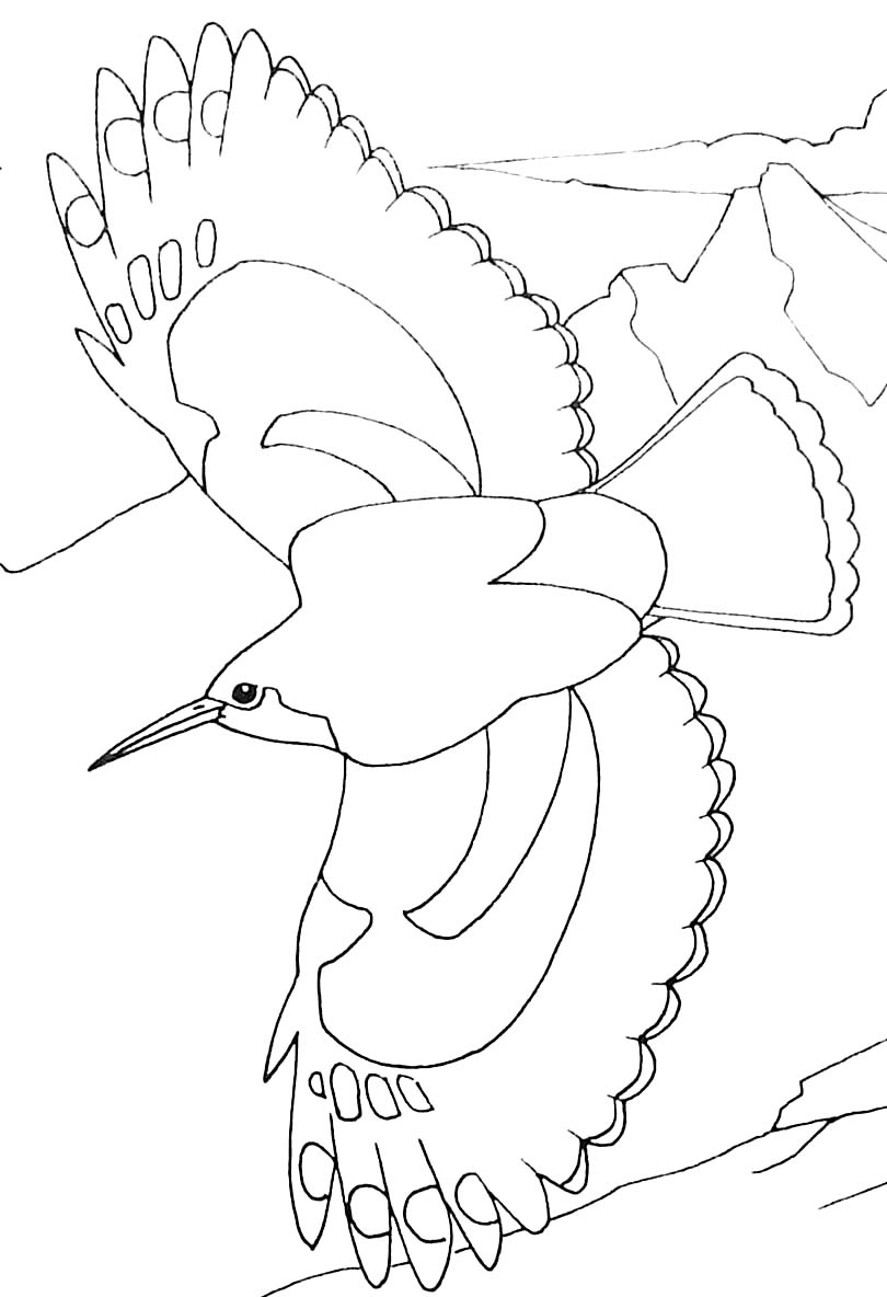 Bird flying - Animal Coloring pages for kids to print & color