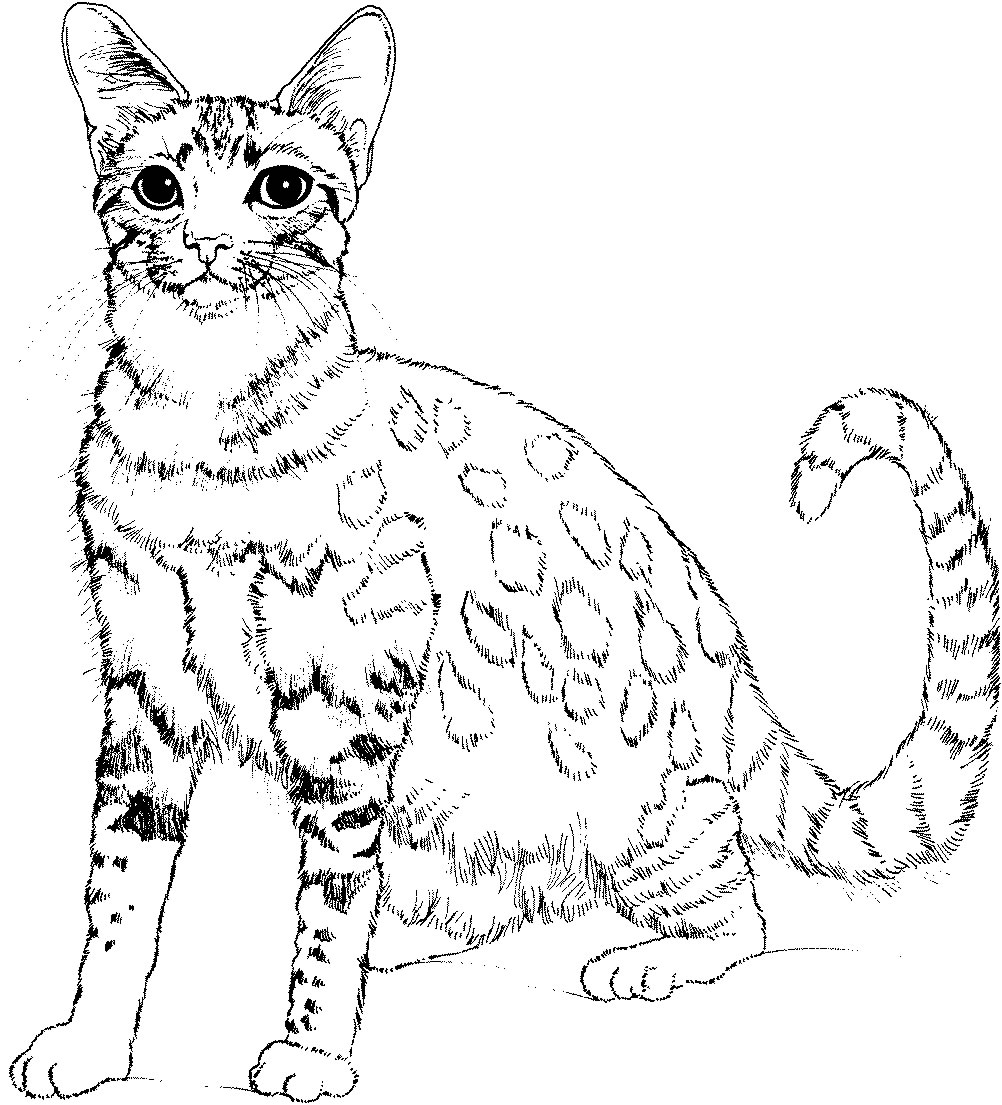 Cute cat - Animal Coloring pages for kids to print & color