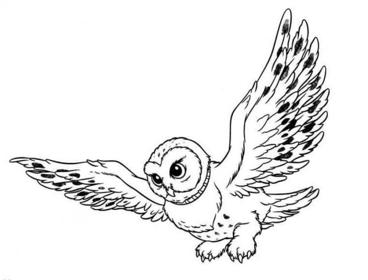 Owl flying - Animal Coloring pages for kids to print & color