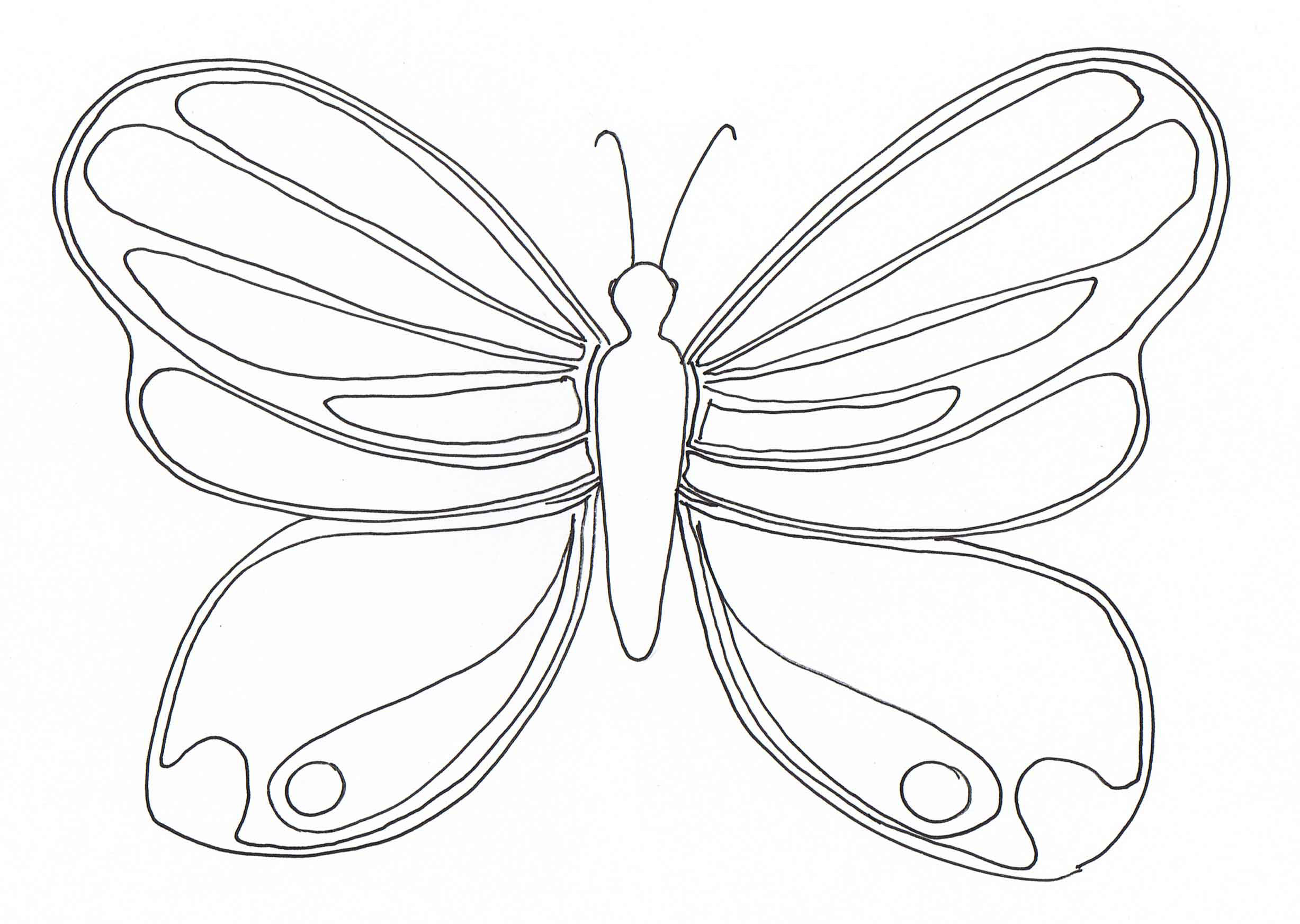 Magnificent butterfly - Insects Coloring pages for kids to ...
