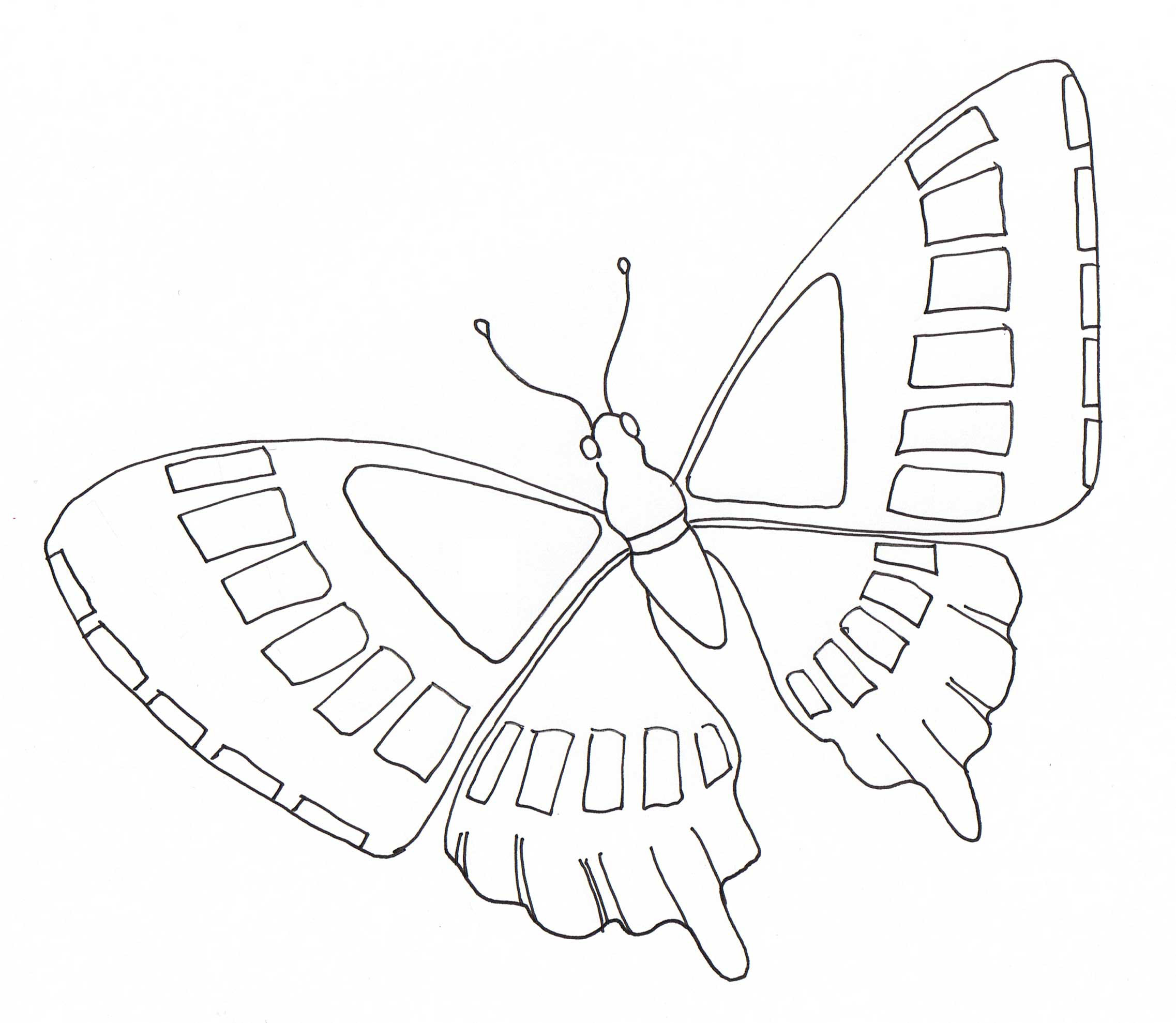 Simple butterfly flying | Insects Coloring pages for kids ...