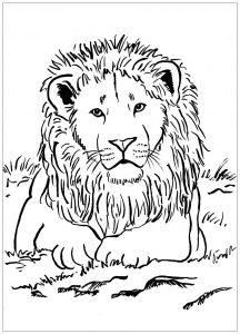 Lions Coloring Pages For Adults