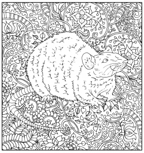 Rat on floral patterns
