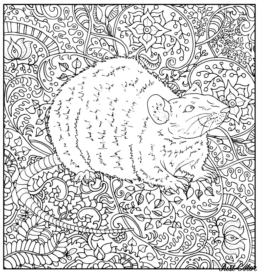 Coloring page representing a realistically drawn rat with various abstract vegetal patterns