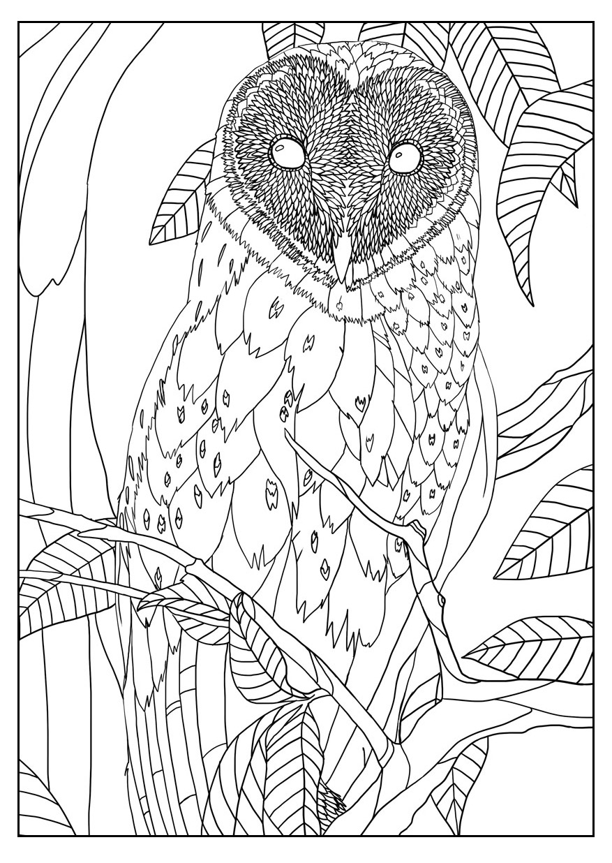 Exclusive Coloring Page For Adult Of A Barn Owl