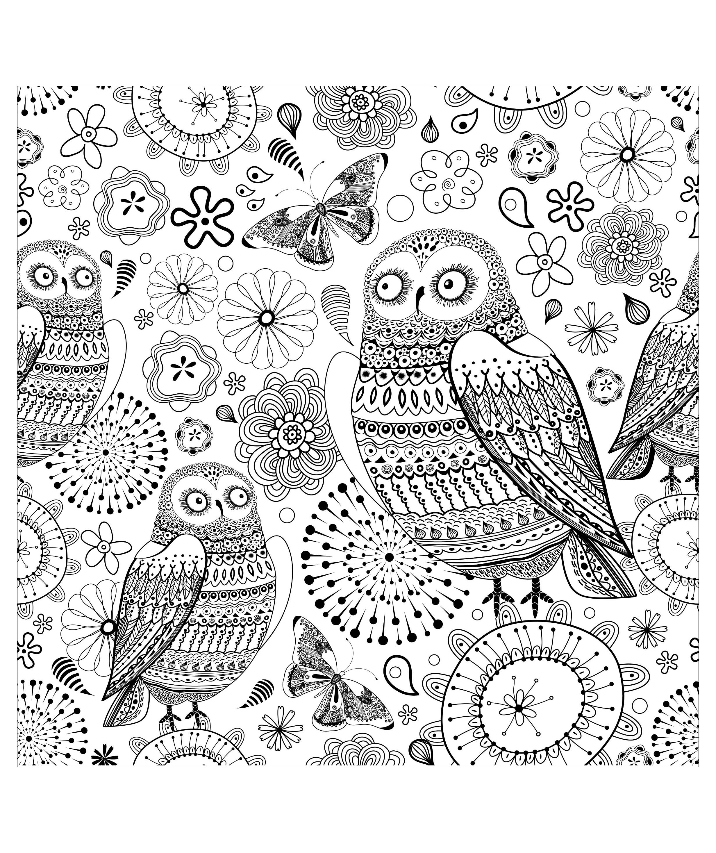 A superb drawing of an owl, to print and color