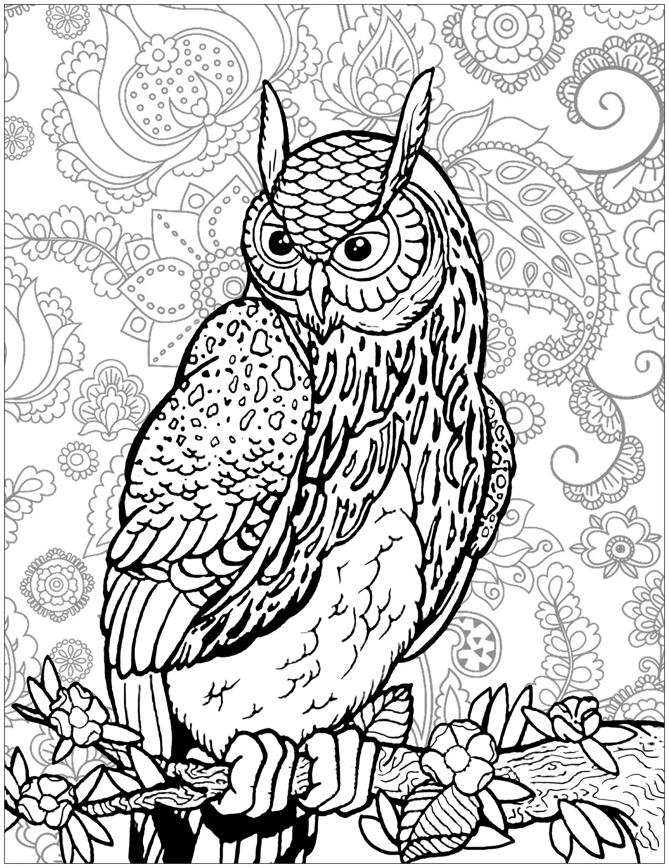 complex animal coloring pages - owl on tree branch background owls adult coloring pages