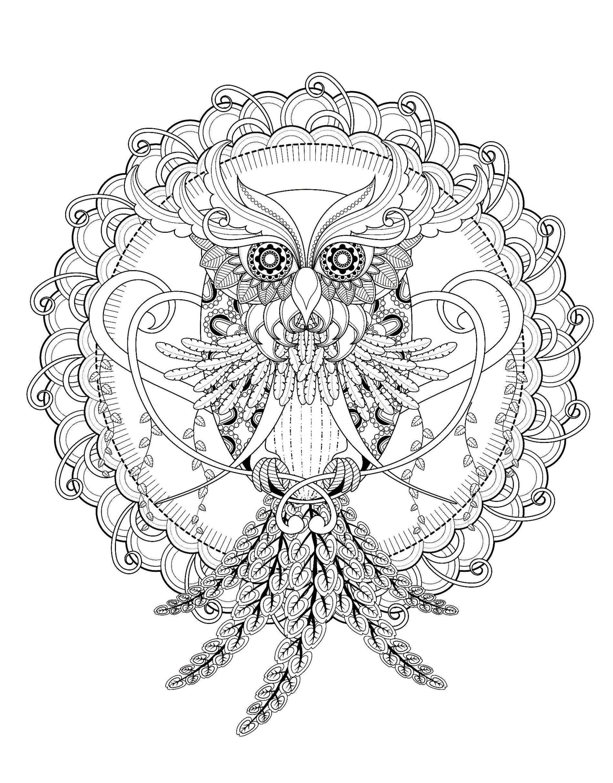 Owl kchung