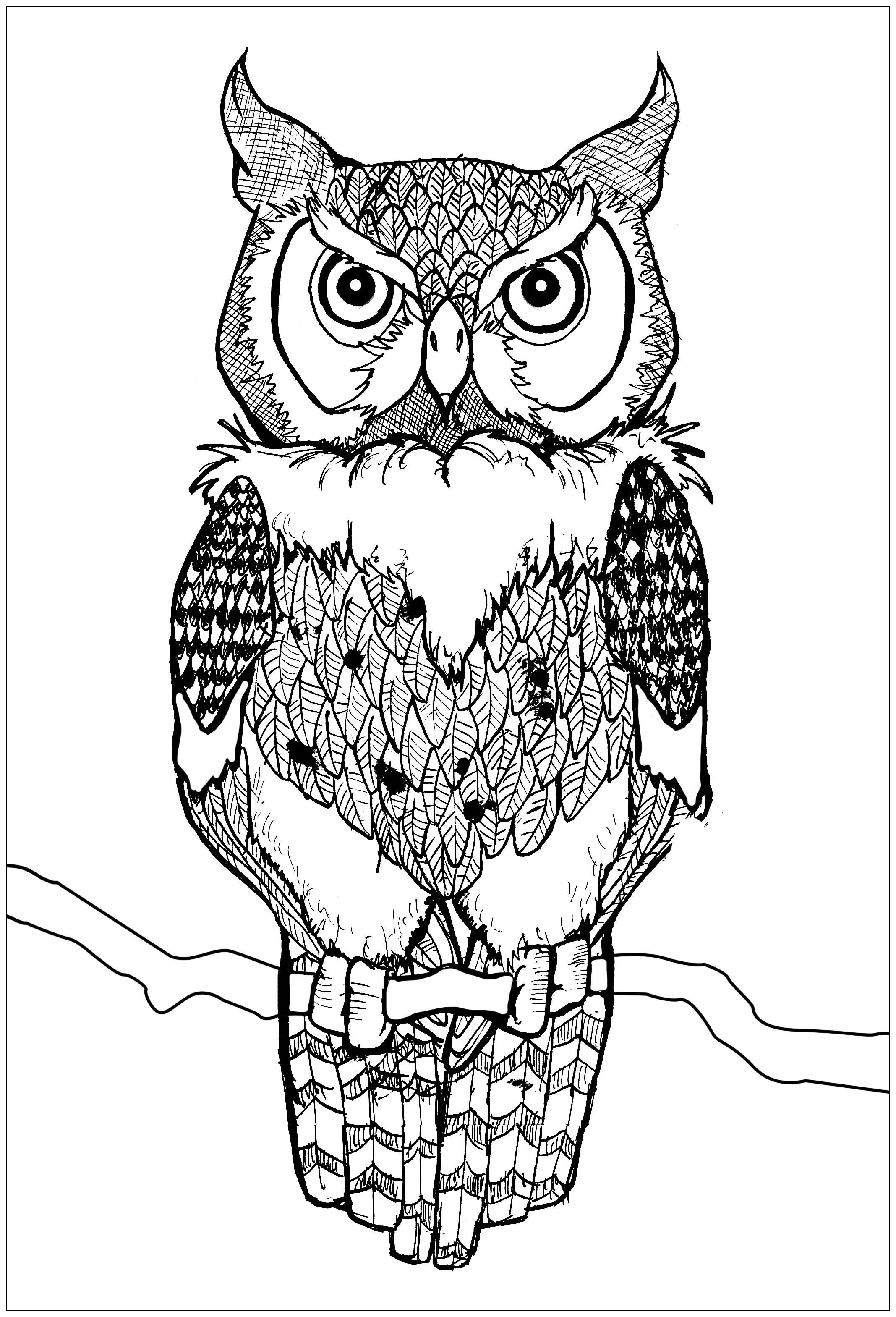Piercing eyes owl Owls Adult Coloring Pages