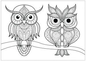 Coloring two owls with simple patterns on branch