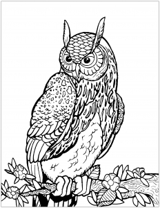 Coloring owl on tree branch