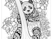 pandas coloring pages for adults