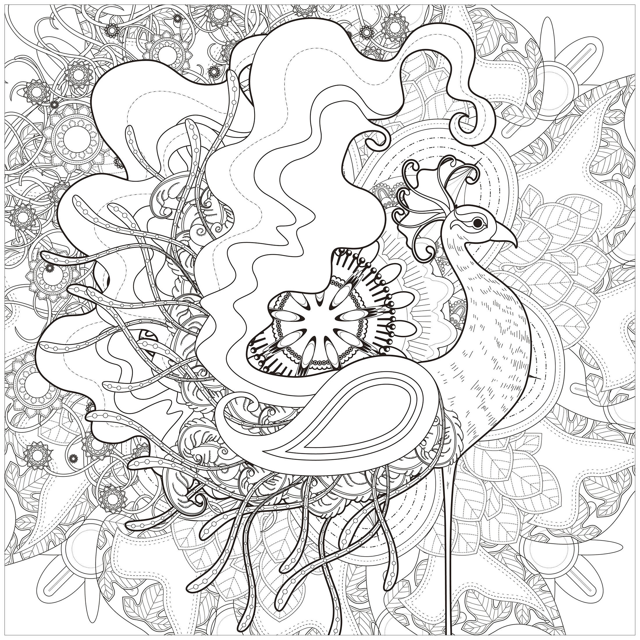 Sublime peacock on abstract background, drawn with different thickness lines