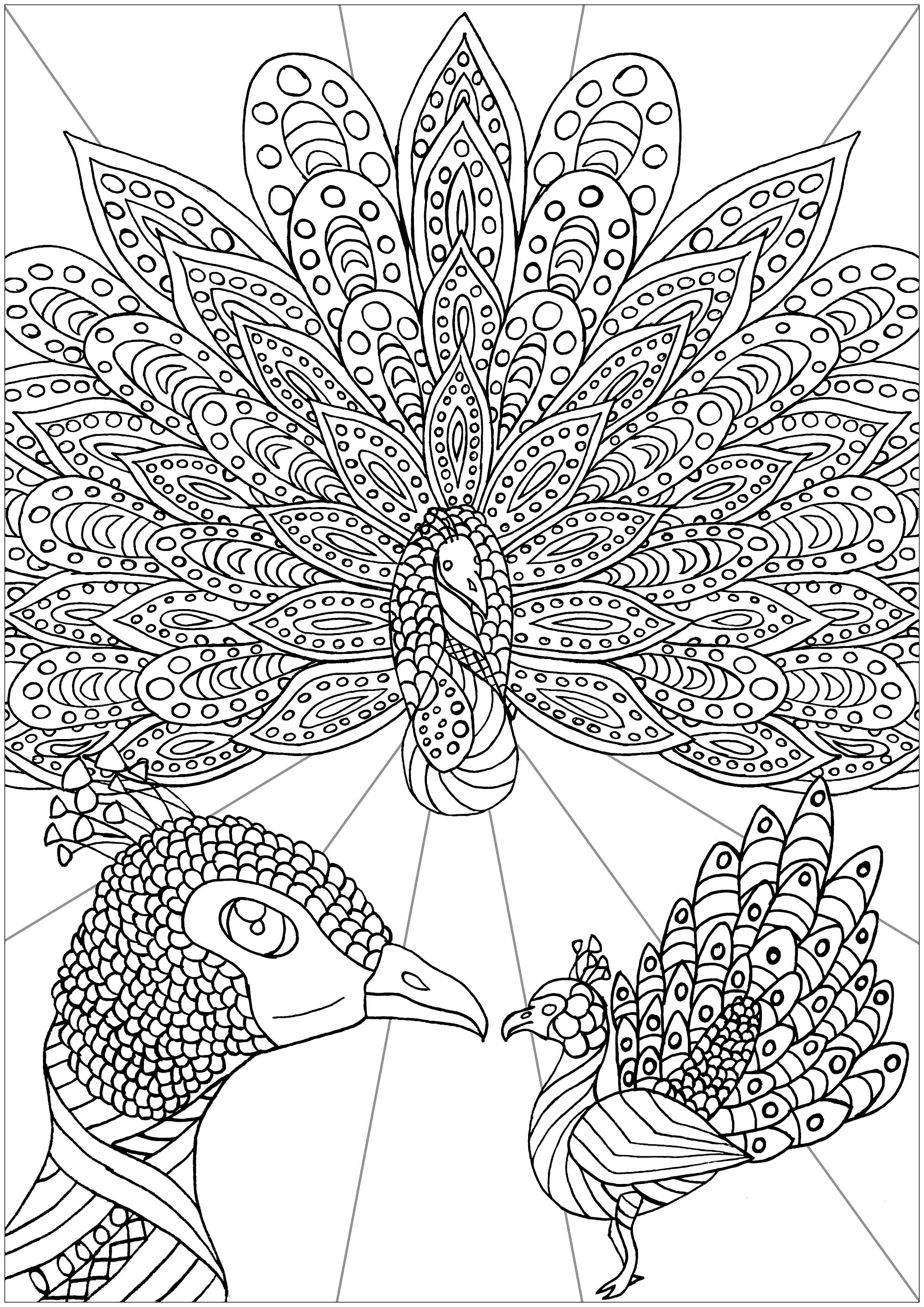 Tree Peacocks Peacocks Adult Coloring Pages