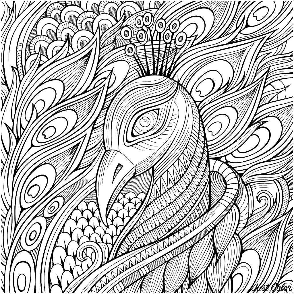 Coloring page representing the head of peacock and its magnificent feathers