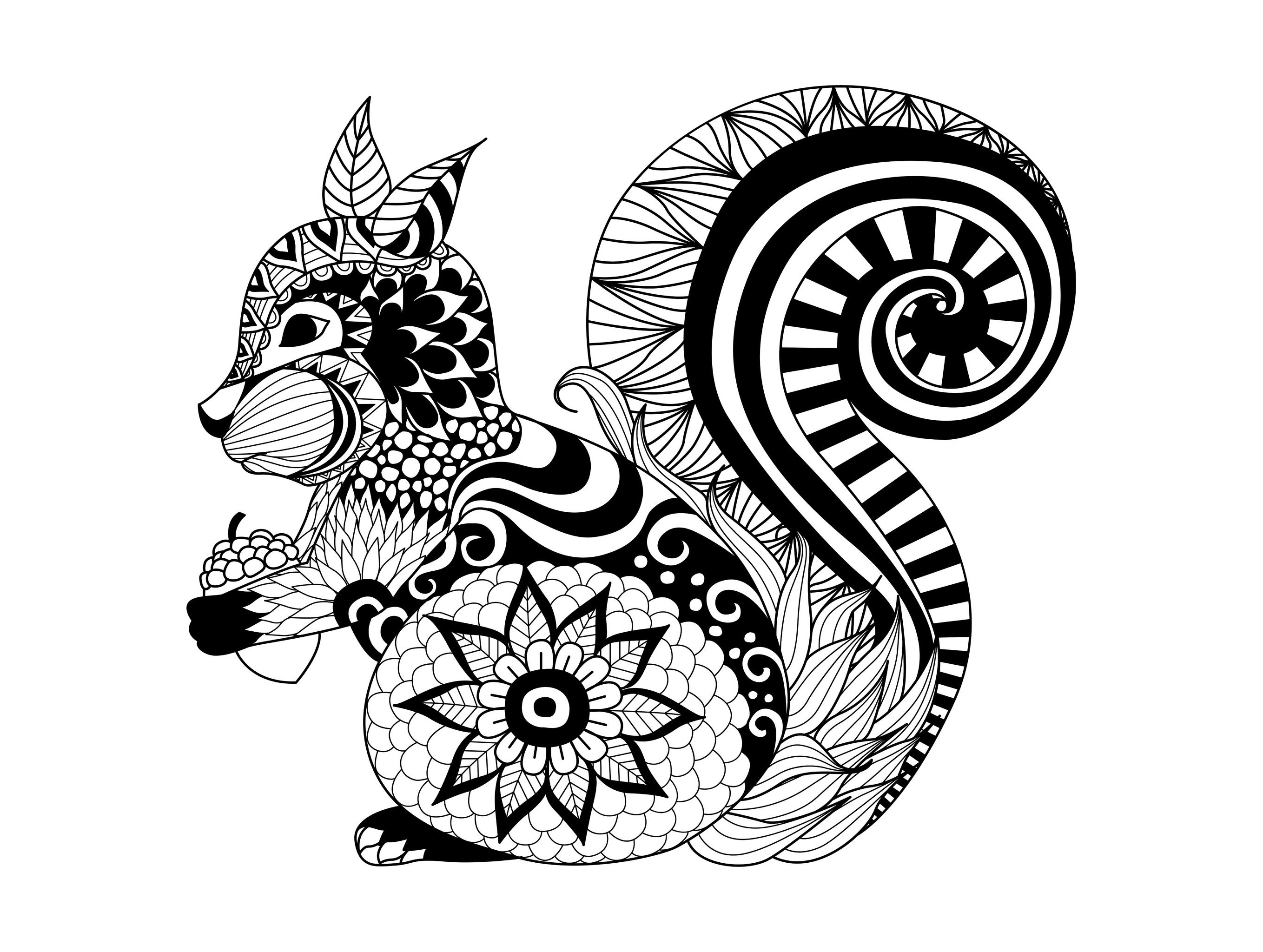 Coloring Page Zentangle Squirrel Cute Little Drawn With Style