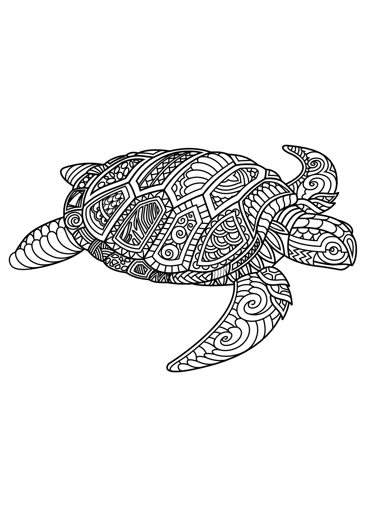 Turtle with complex and beautiful patterns