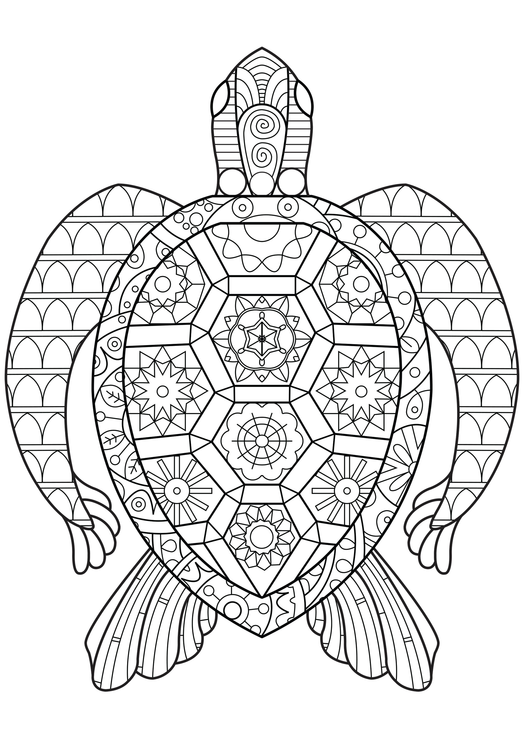 A turtle with abstract and abstract and very regular patterns
