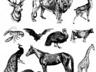 coloring-representation-vintage-animals