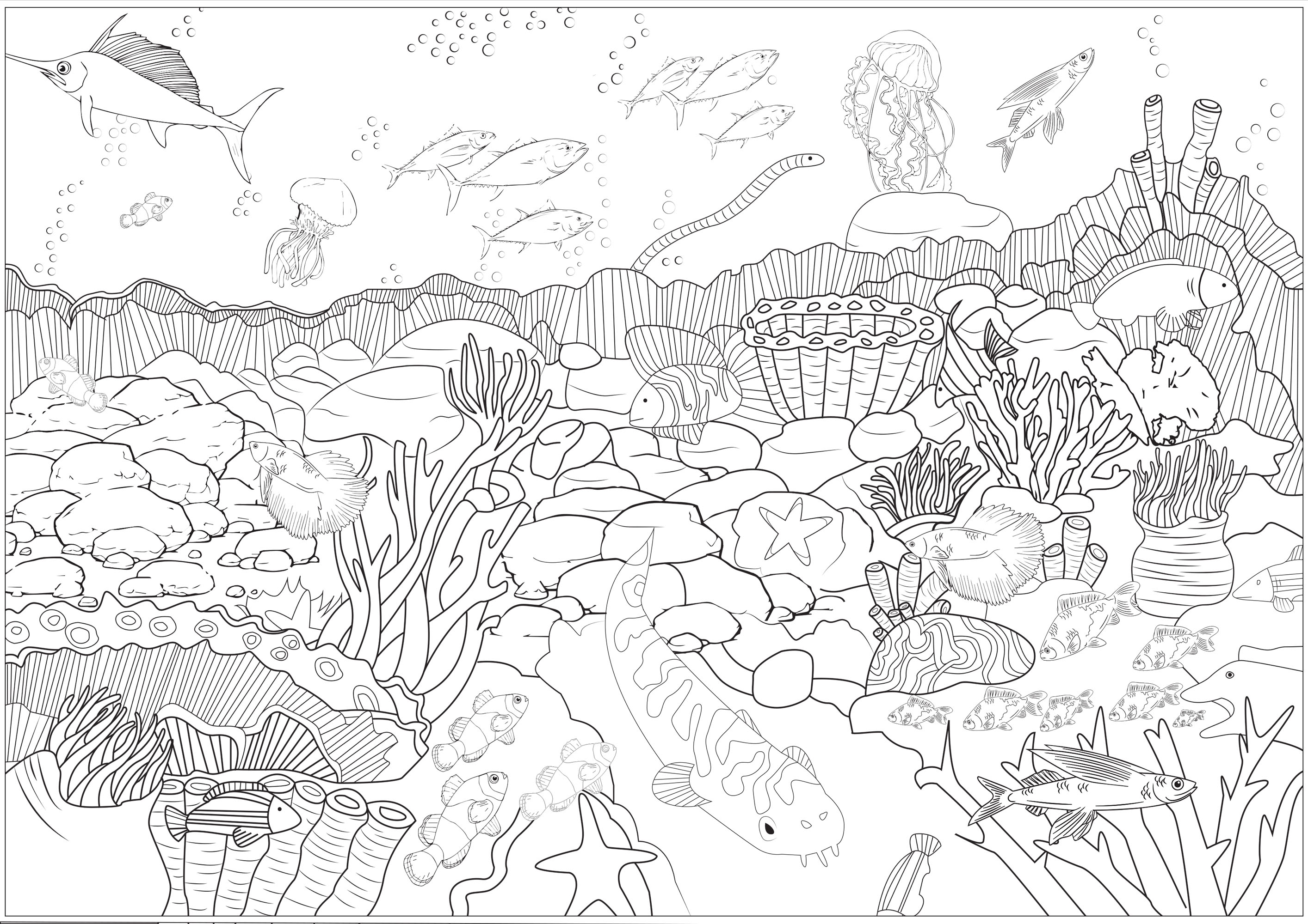 Color these seabed and the different species of fishes, octopus, corals that live there ...