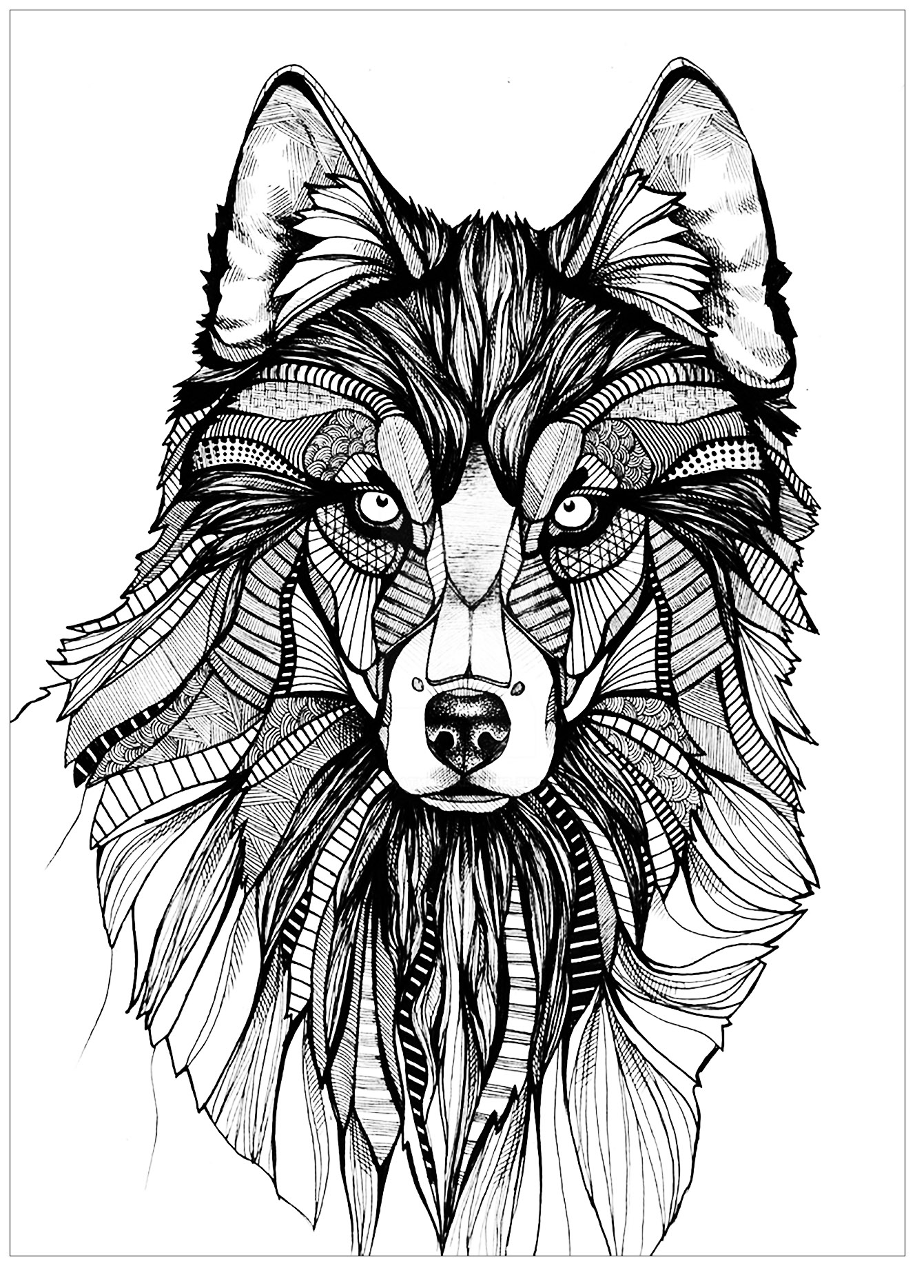 magnificent wolf drawing - Wolf Coloring Pages
