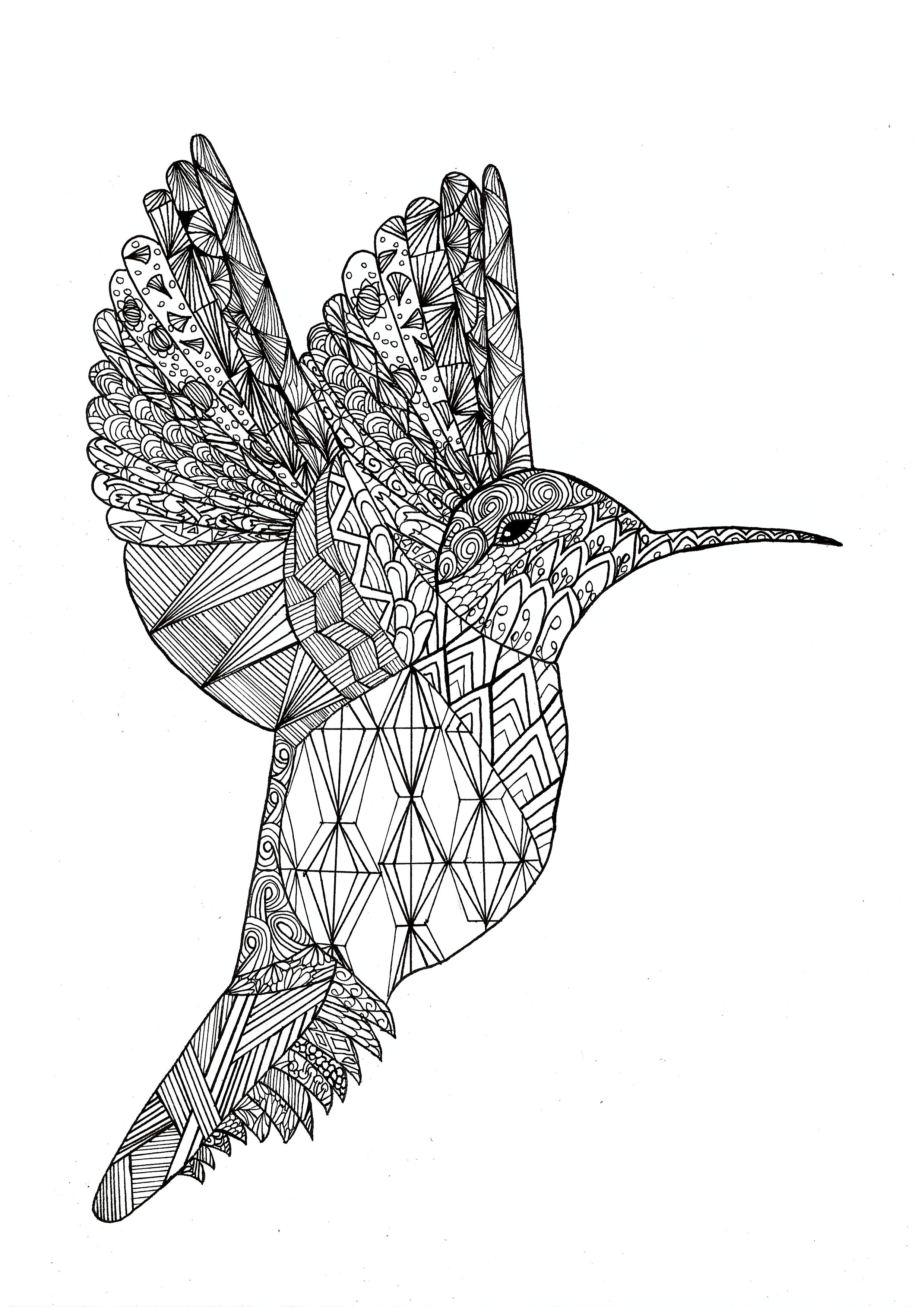 Zentangle colibri - Zentangle Adult Coloring Pages