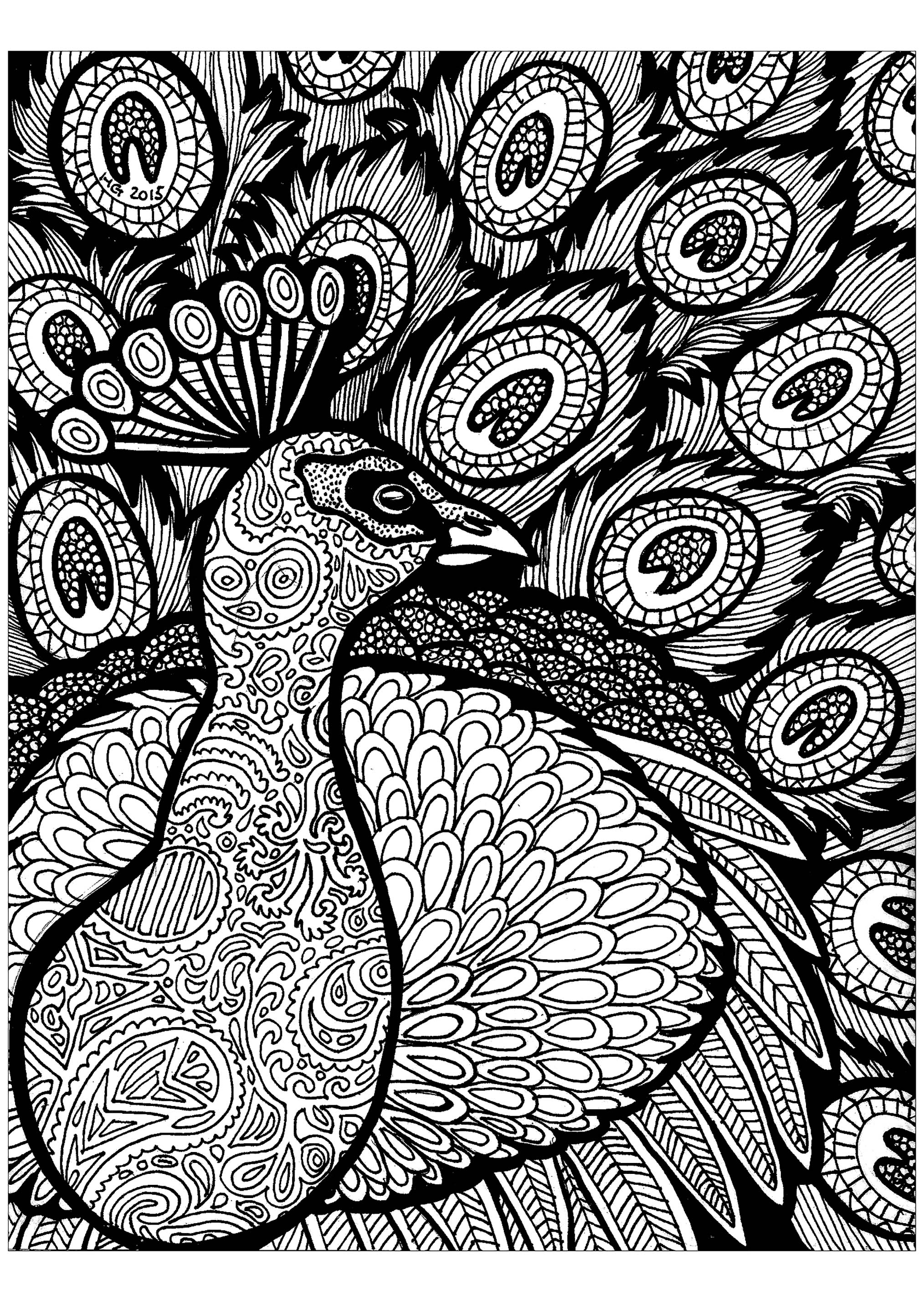 Lines of the peacock - Zentangle Adult Coloring Pages