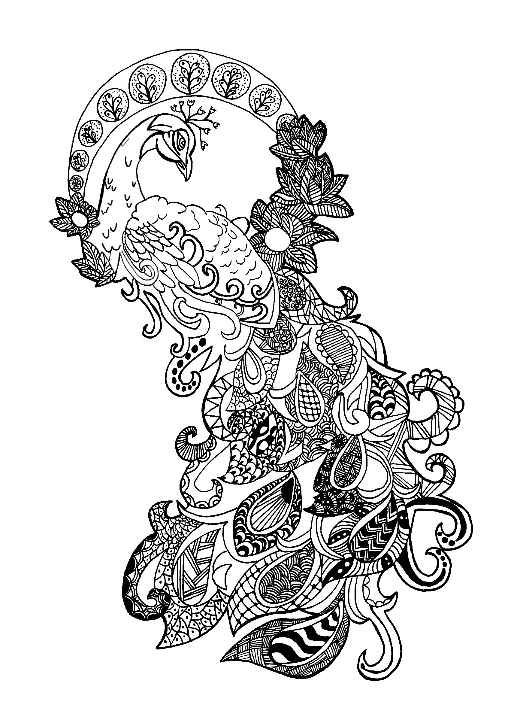 peacock zentangle celine Zentangle Coloring pages for adults