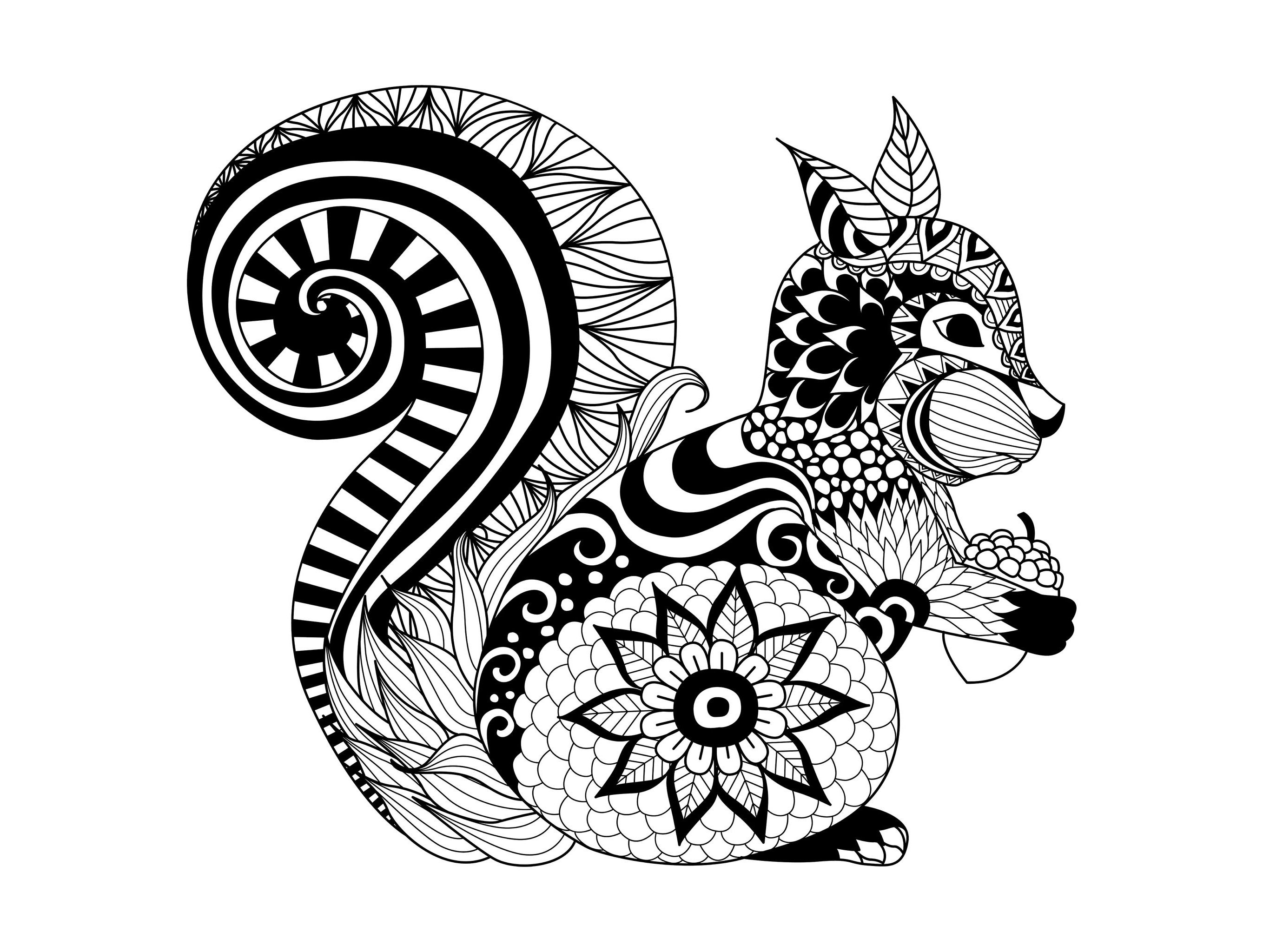 Coloring Page Zentangle Squirrel