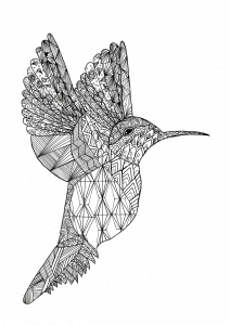 Coloring zentangle colibri by chloe